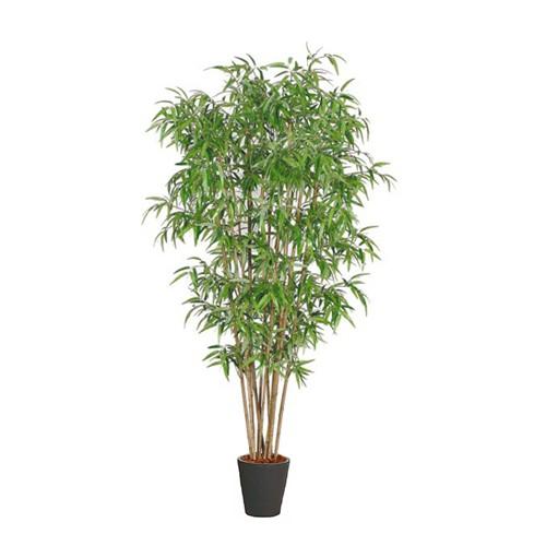 Bamboe plant voor binnen halve parasol for Bamboe plant